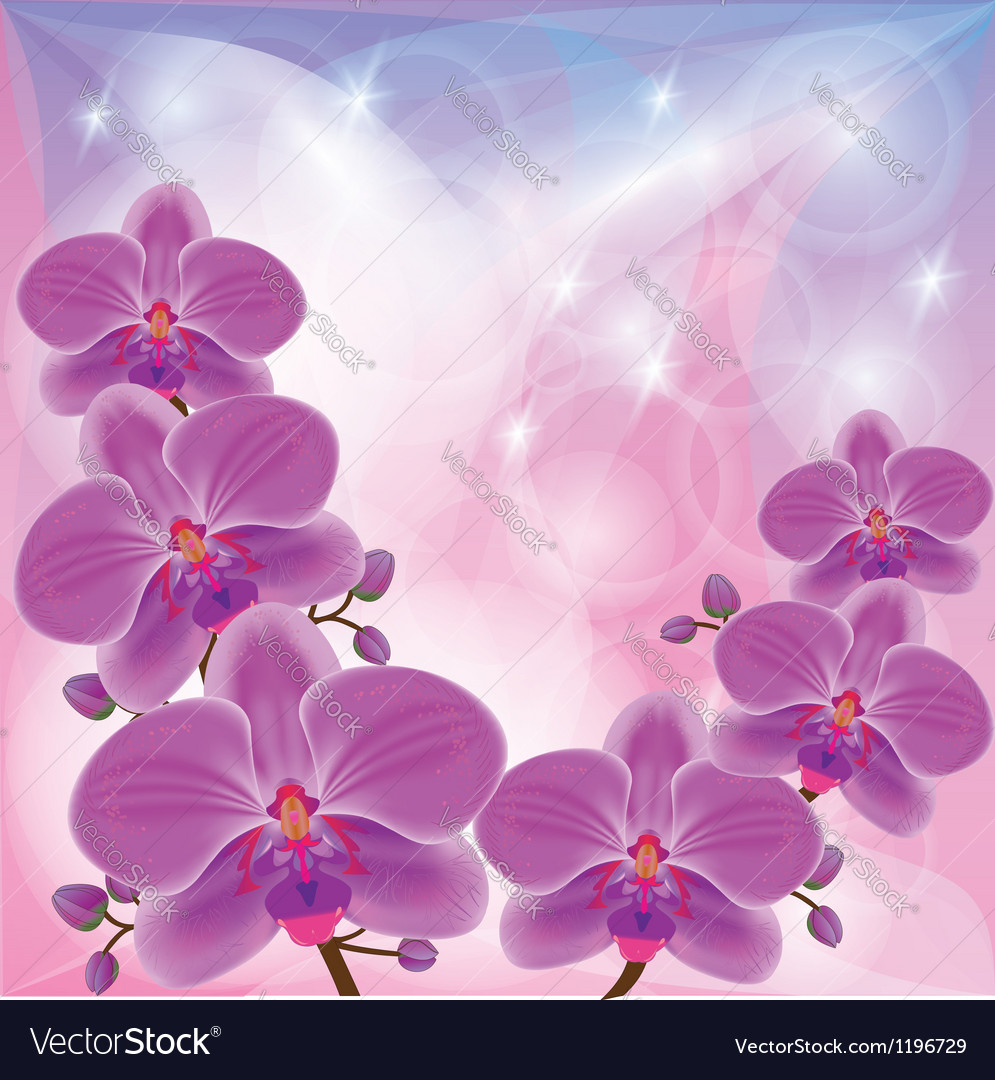 Floral background with exotic flowers orchids vector image