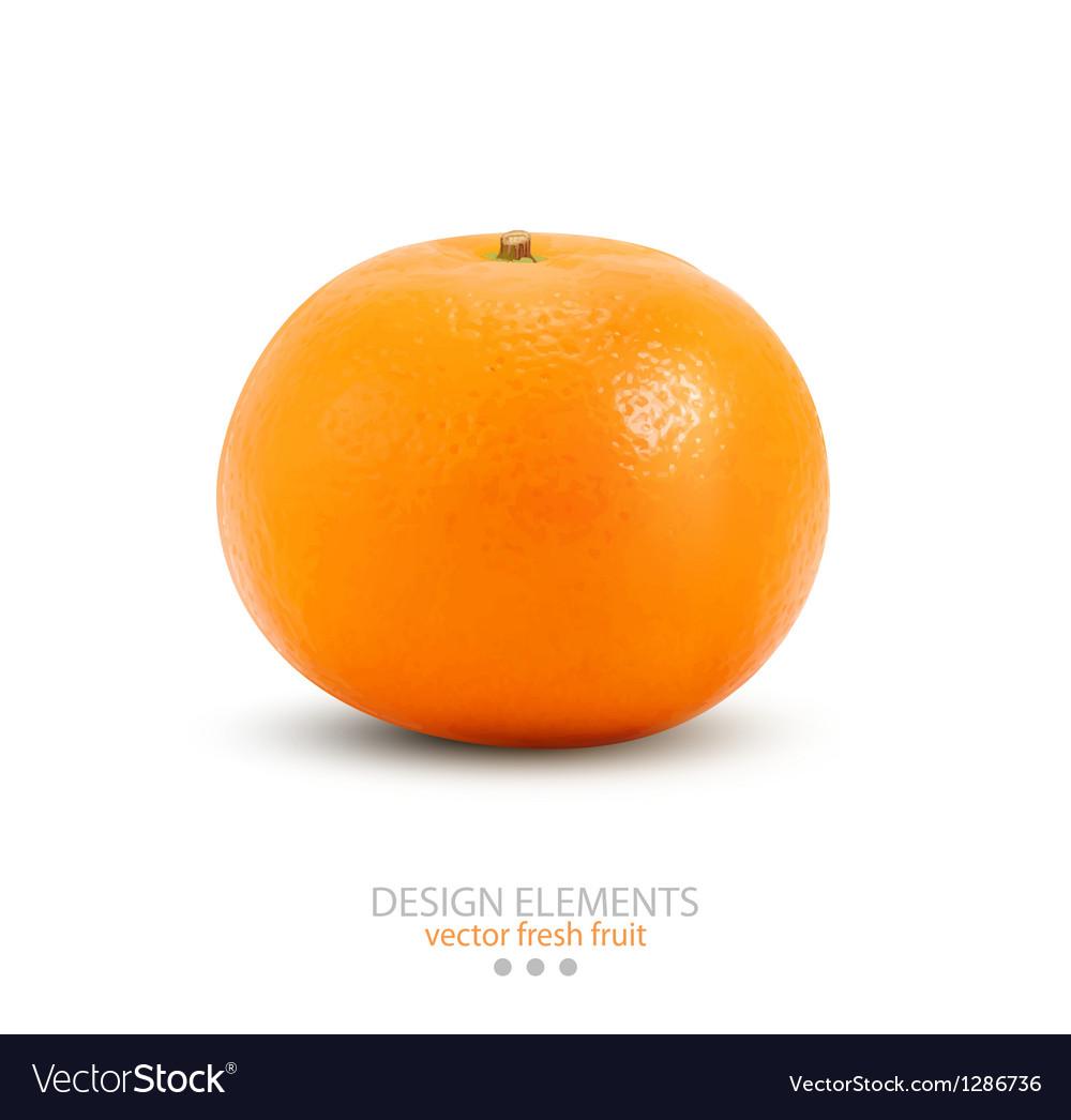 Mandarin isolated on white background vector image