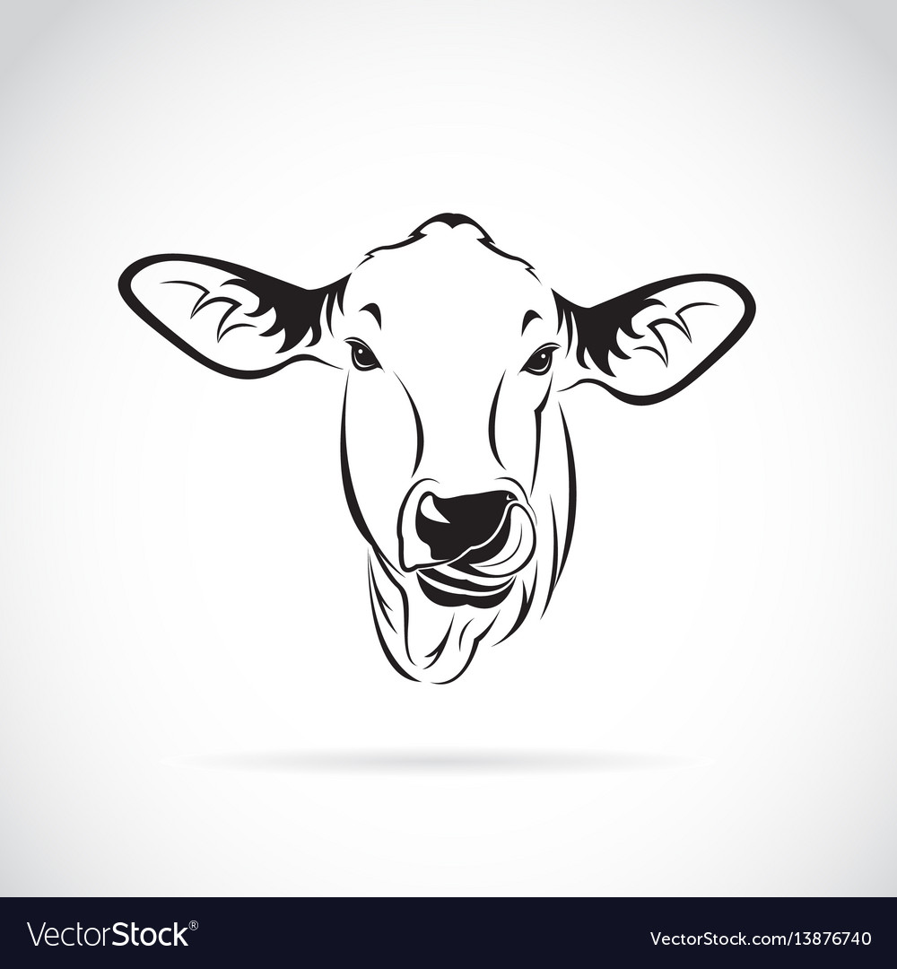 Cow head on white background calf vector image