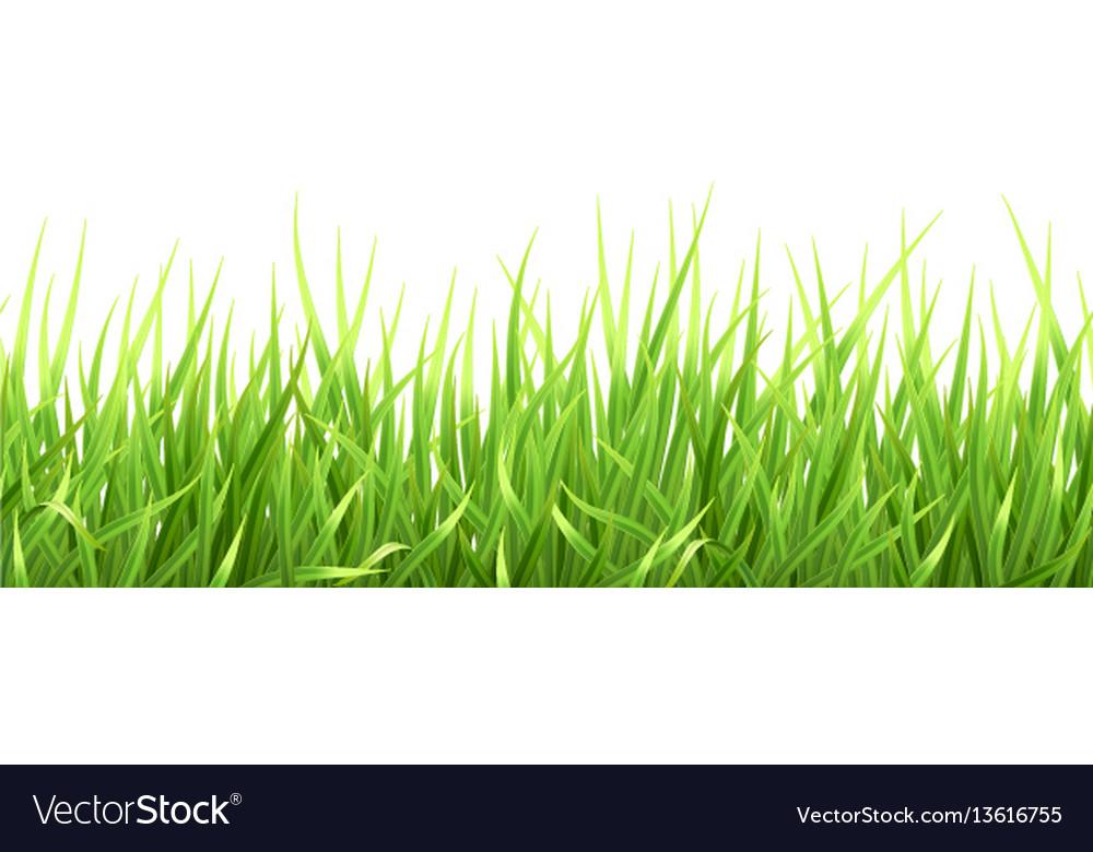 Super realistic grass vector image