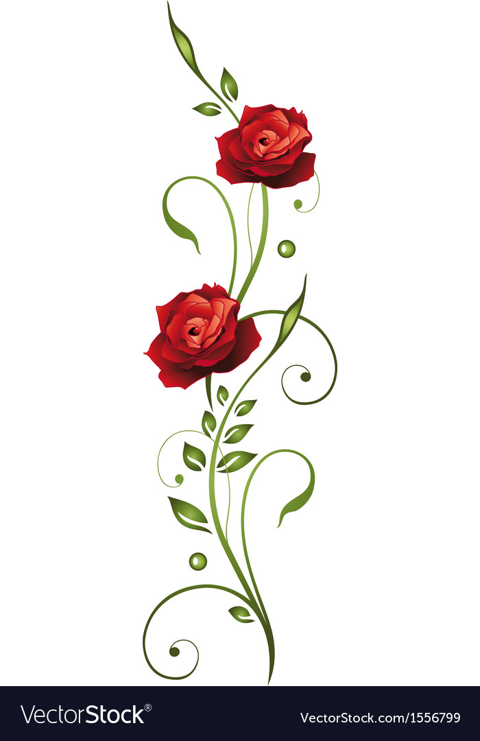 Rose love vector image