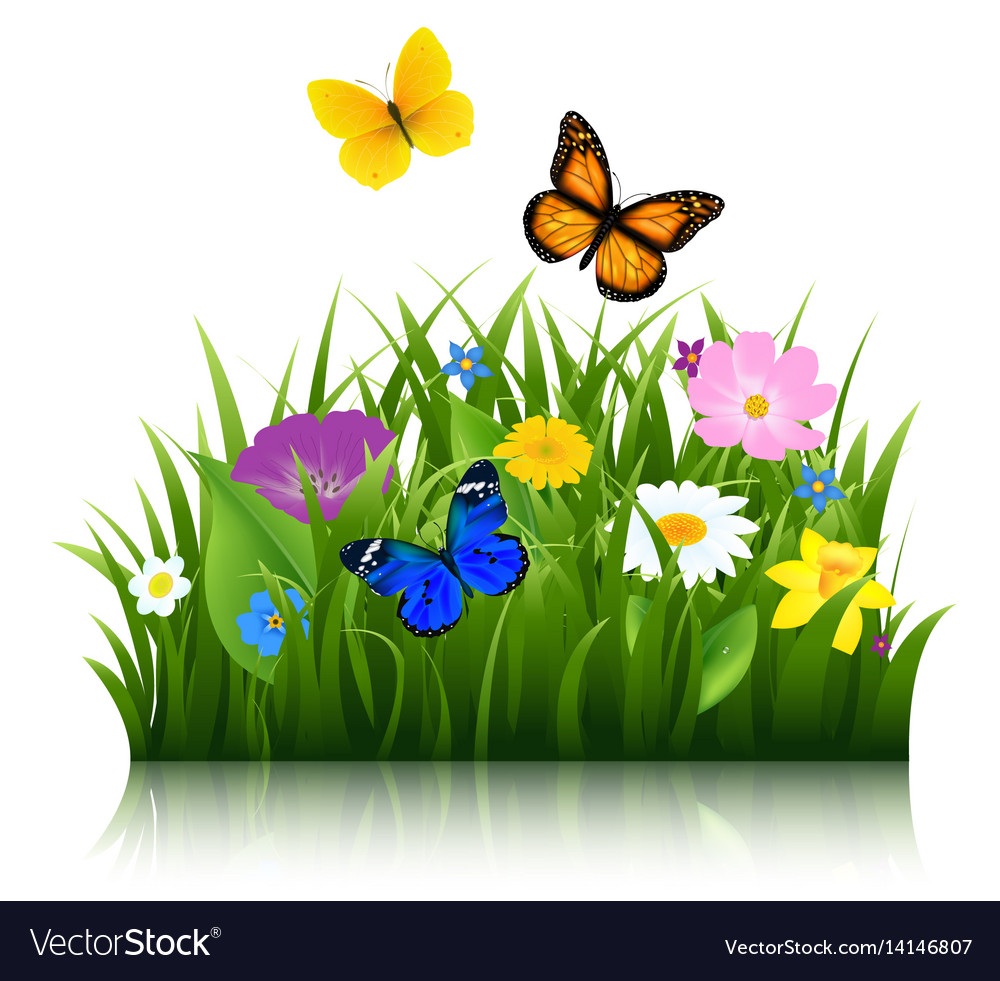 Summer flowers with butterfly Royalty Free Vector Image