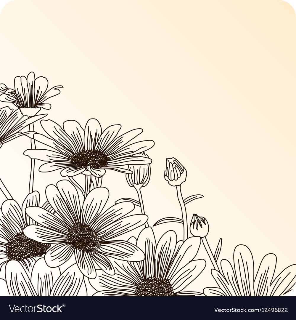 Daisy flowers on a beige background outline vector image