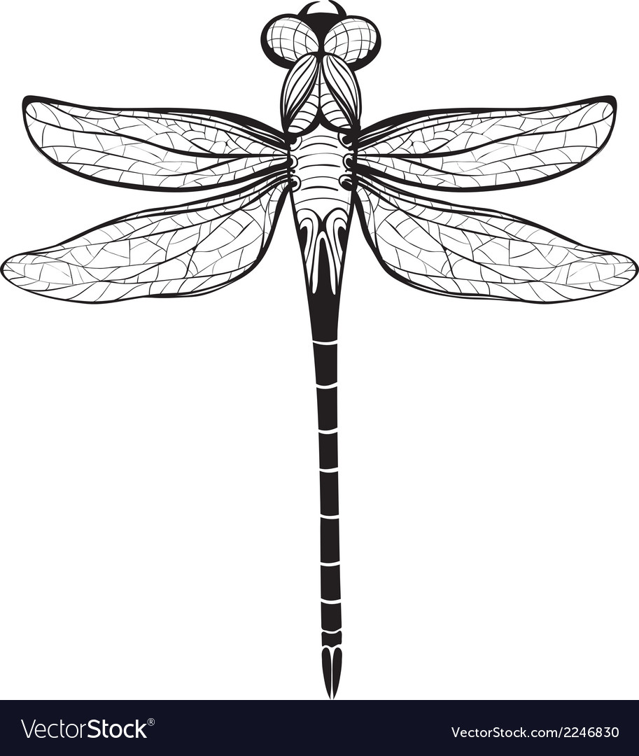 Dragonfly Insect Black Inky Drawing vector image