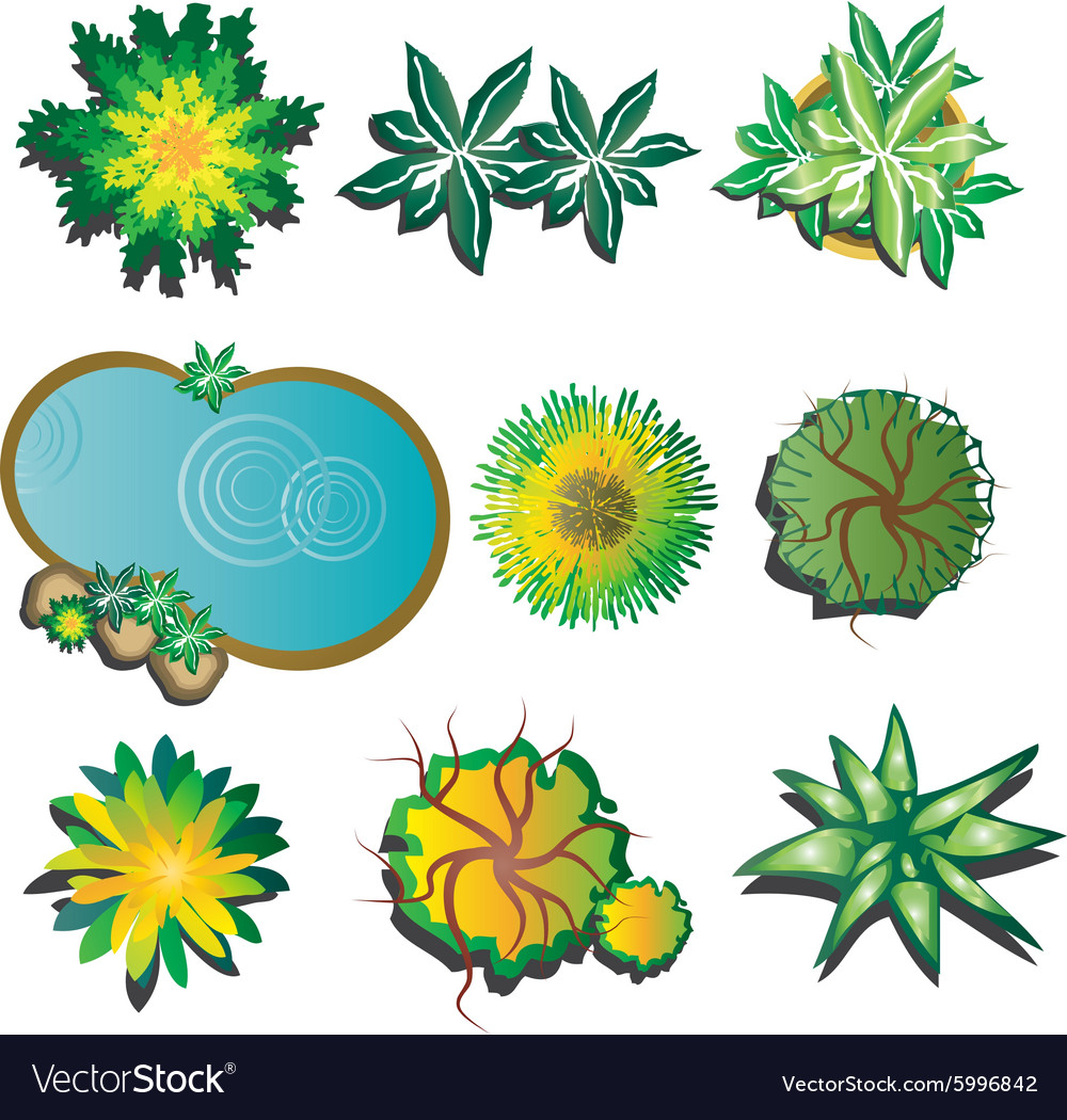 Plants top view set 1 Royalty Free Vector Image for Plant Top View Vector  300lyp