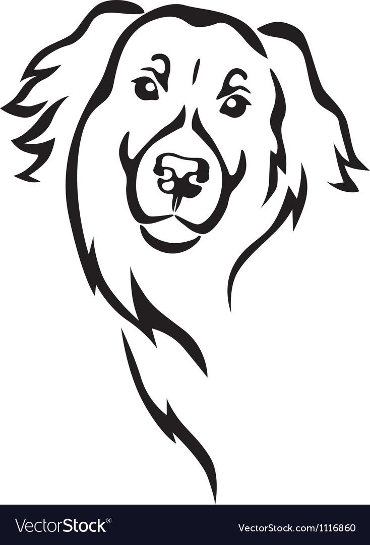 Newfoundland dog head vector image