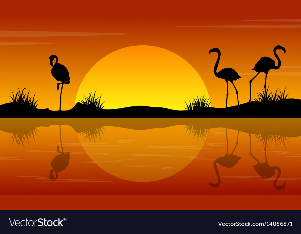 Lake scenery with flamingo at sunset silhouettes vector image