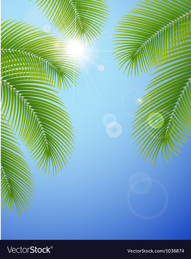 Sunny blue sky and palm branches vector image