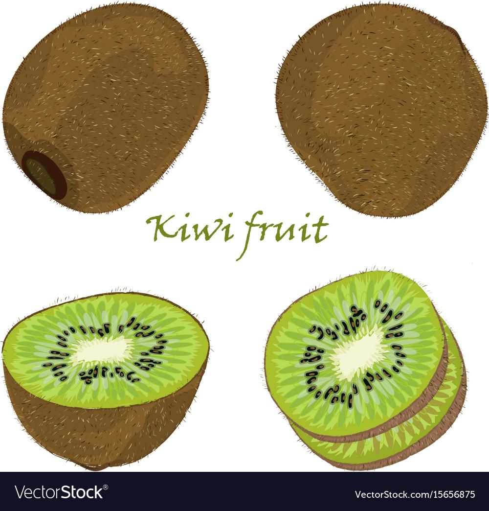 Set of hand-drawn kiwi fruit single peeled and vector image