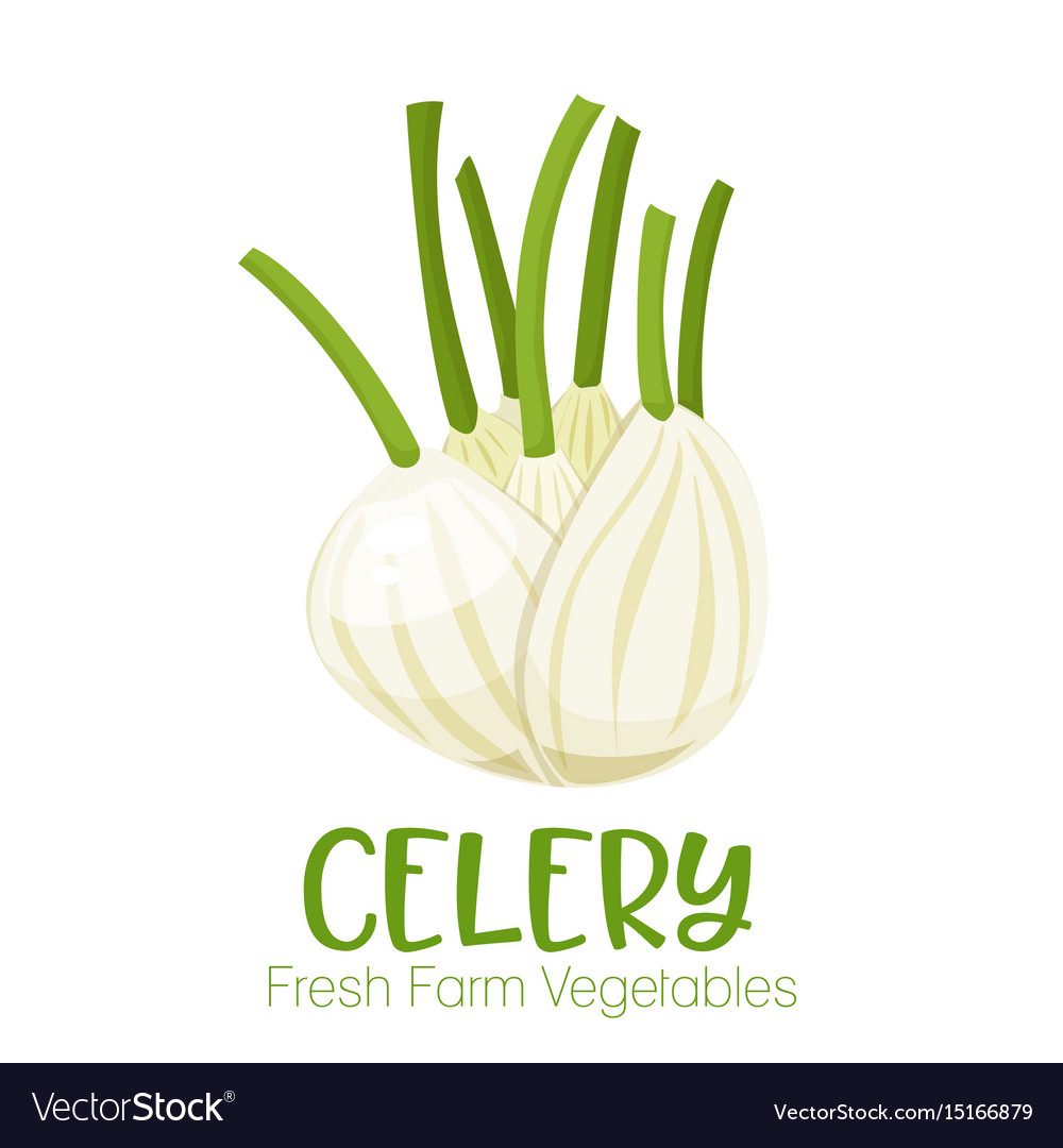 Celery isolated on white background vector image