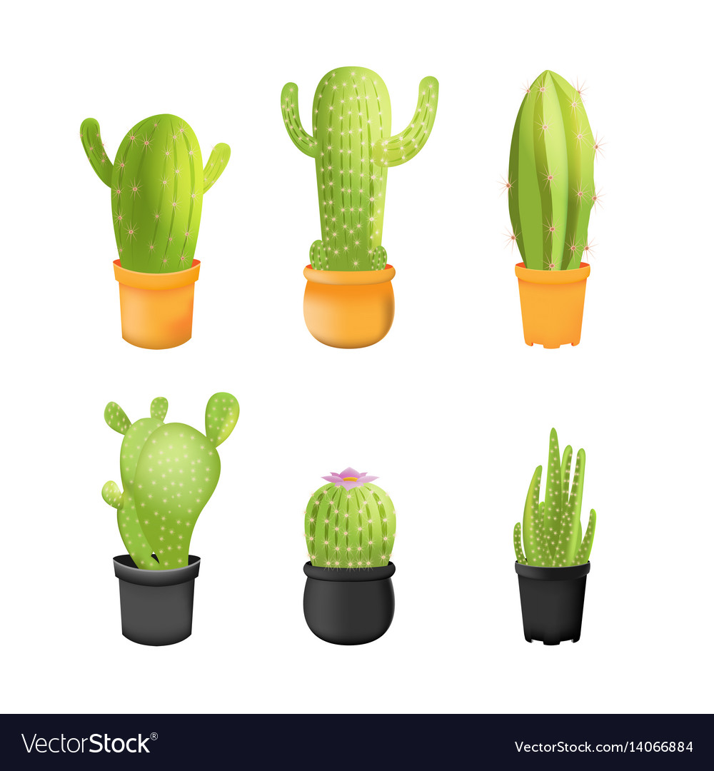 Cactus plants icons set isolated vector image