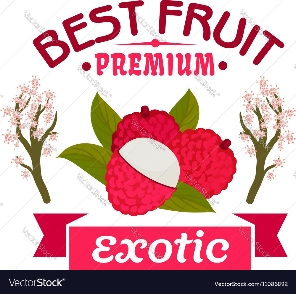 Lychee fruit with blooming lichee trees emblem vector image