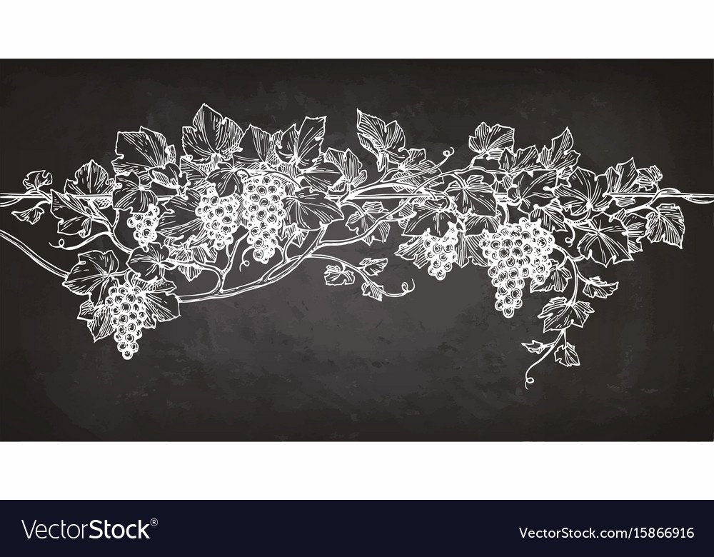 Vine sketch on chalkboard vector image