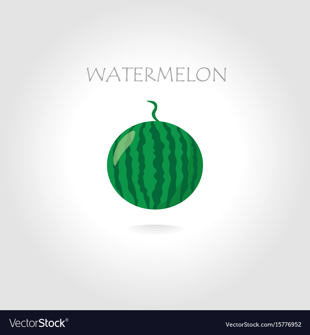 Green watermelon vector image