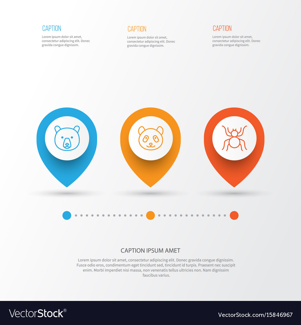 Zoology icons set collection of spider bear vector image