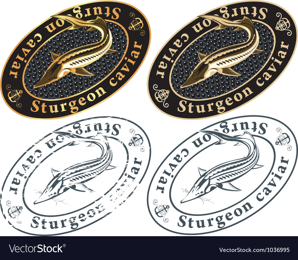 Caviar vector image