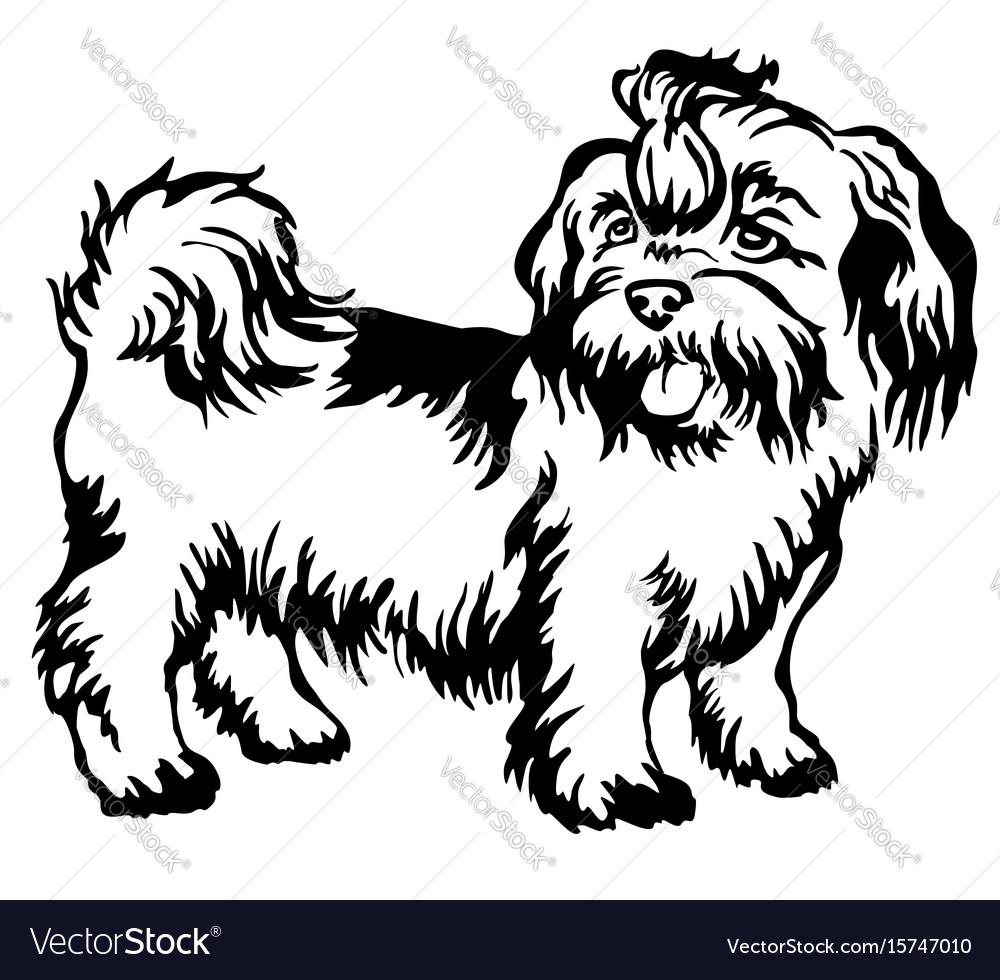 Decorative standing portrait of dog shih-tzu vector image
