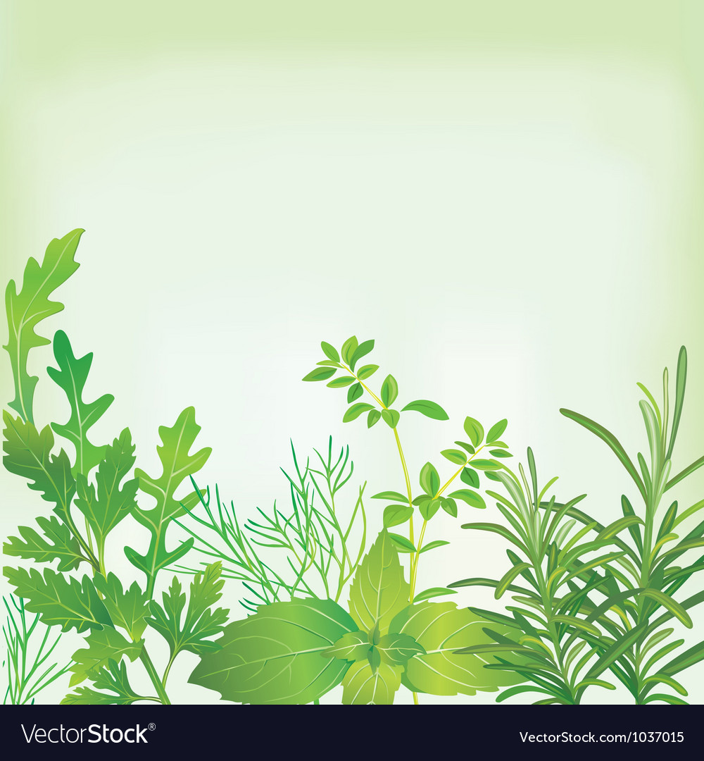 Frame of fresh herbs vector image