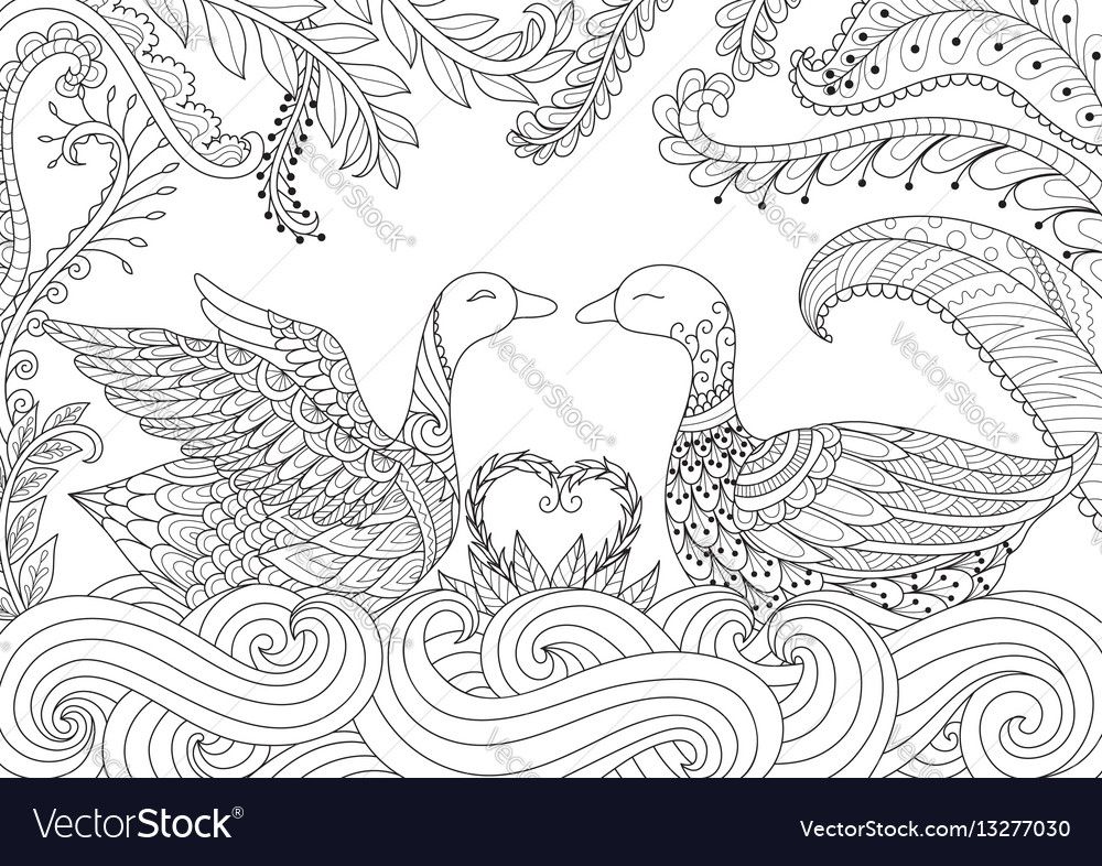 Two swans playing together vector image
