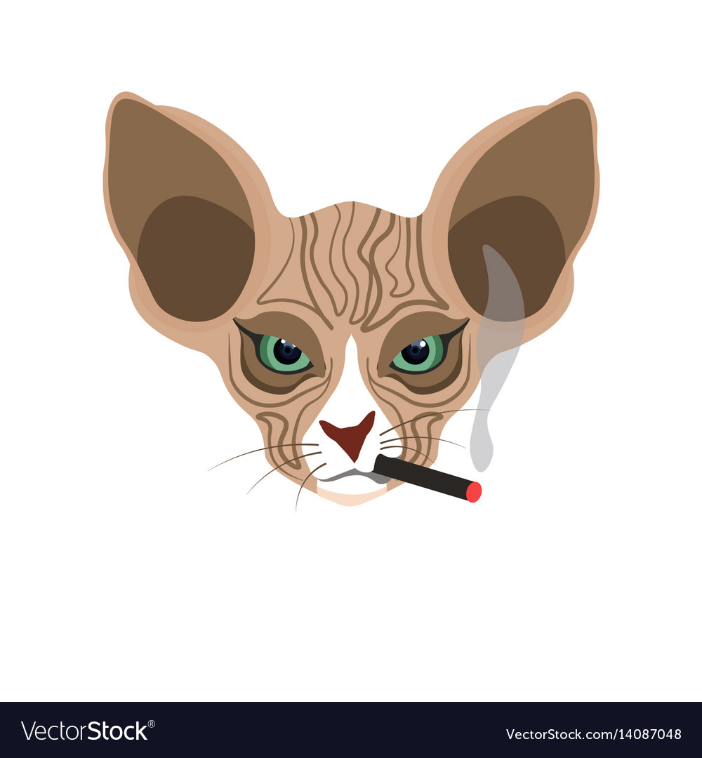 Sphynx hairless cat face with cigarette isolated vector image