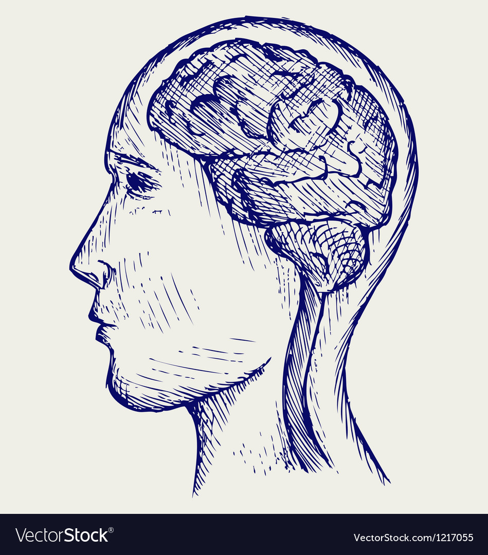 Human brain and head vector image