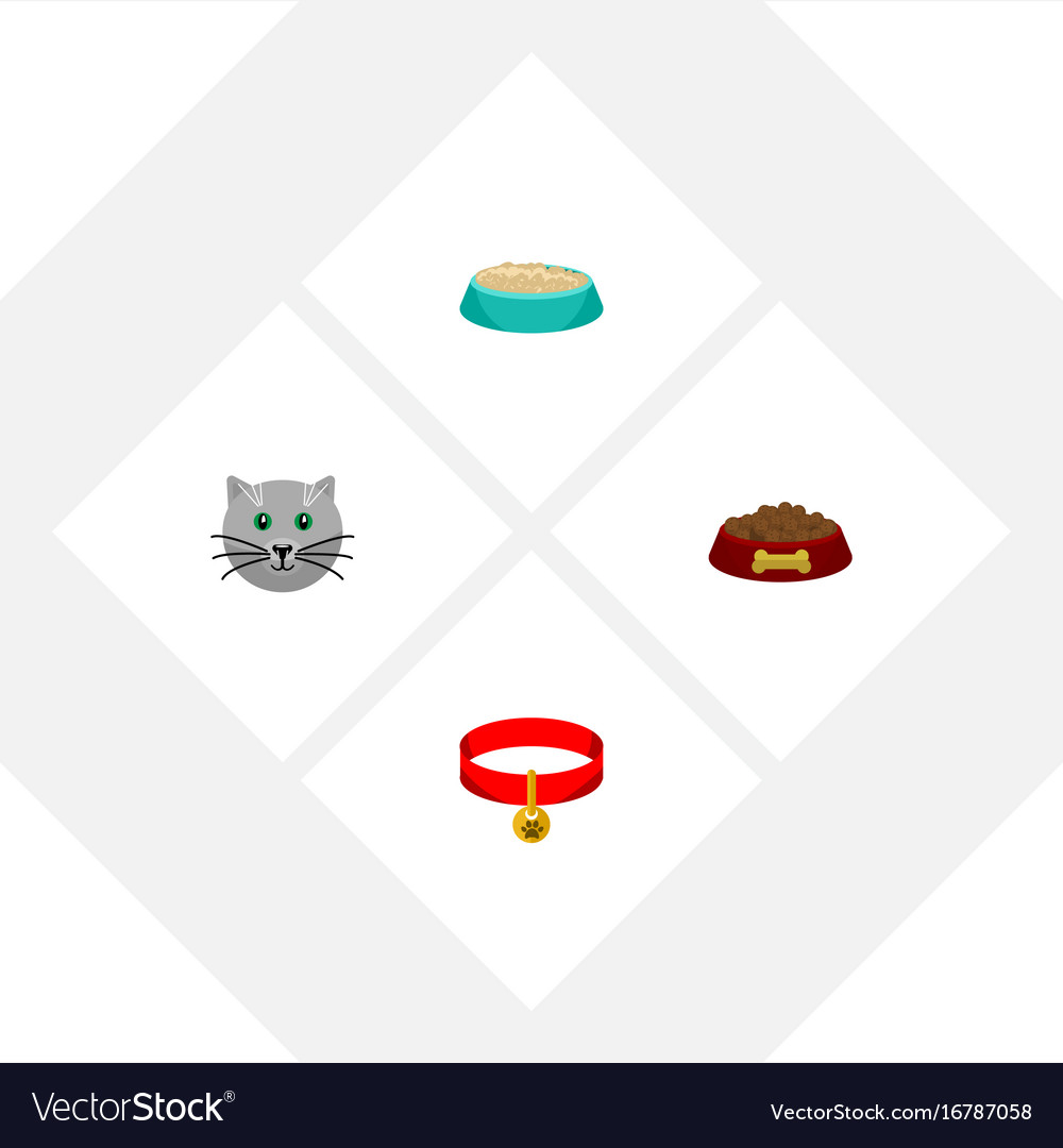 Flat icon pets set of kitty collar dog food vector image