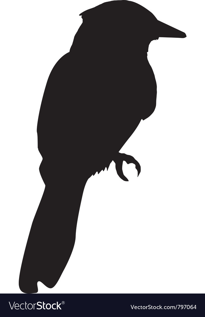 silhouette of kingfisher vector image