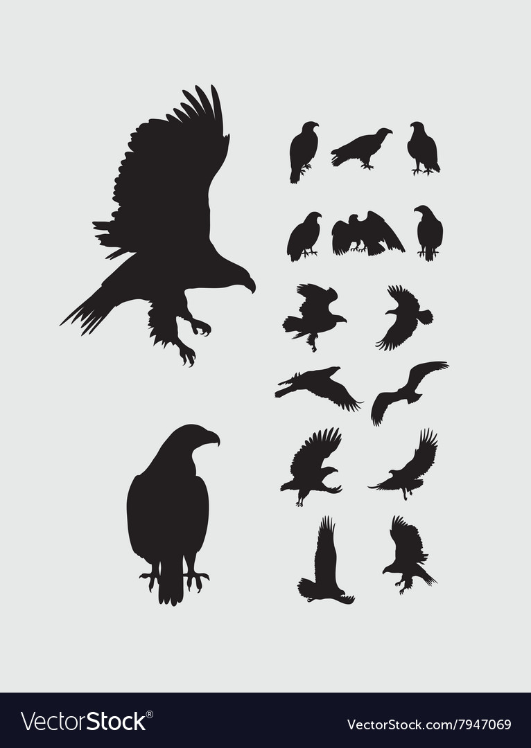 Eagle Set Silhouettes vector image
