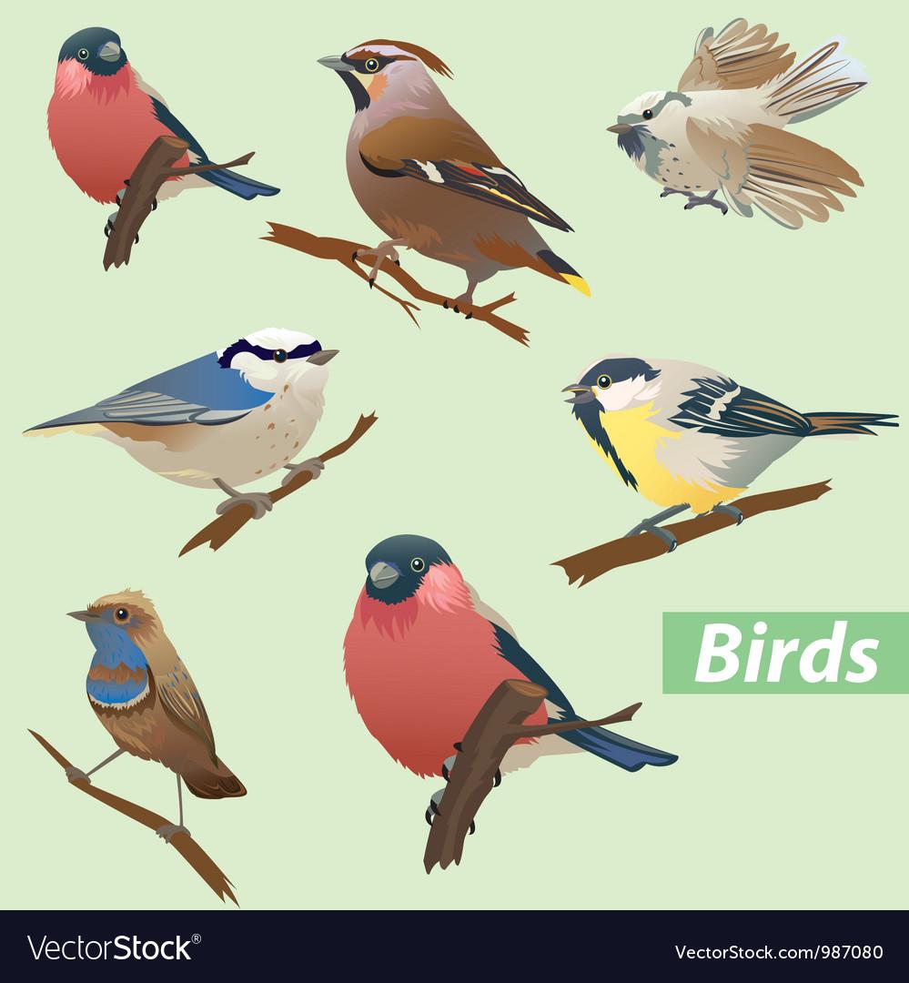 Set of birds vector image
