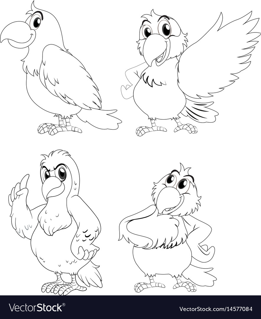 Animal outline for parrot birds vector image