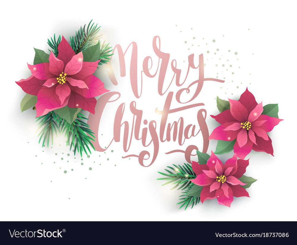 Christmas poinsettia design card vector image