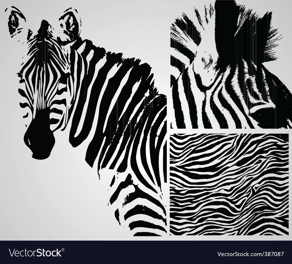 Zebra background vector image