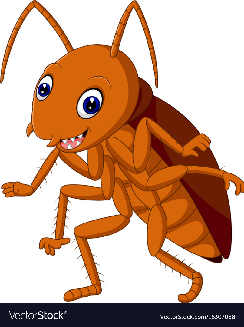Cute cockroach vector image