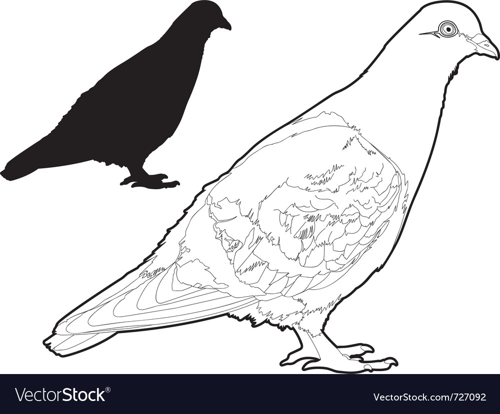Pigeon two vector image