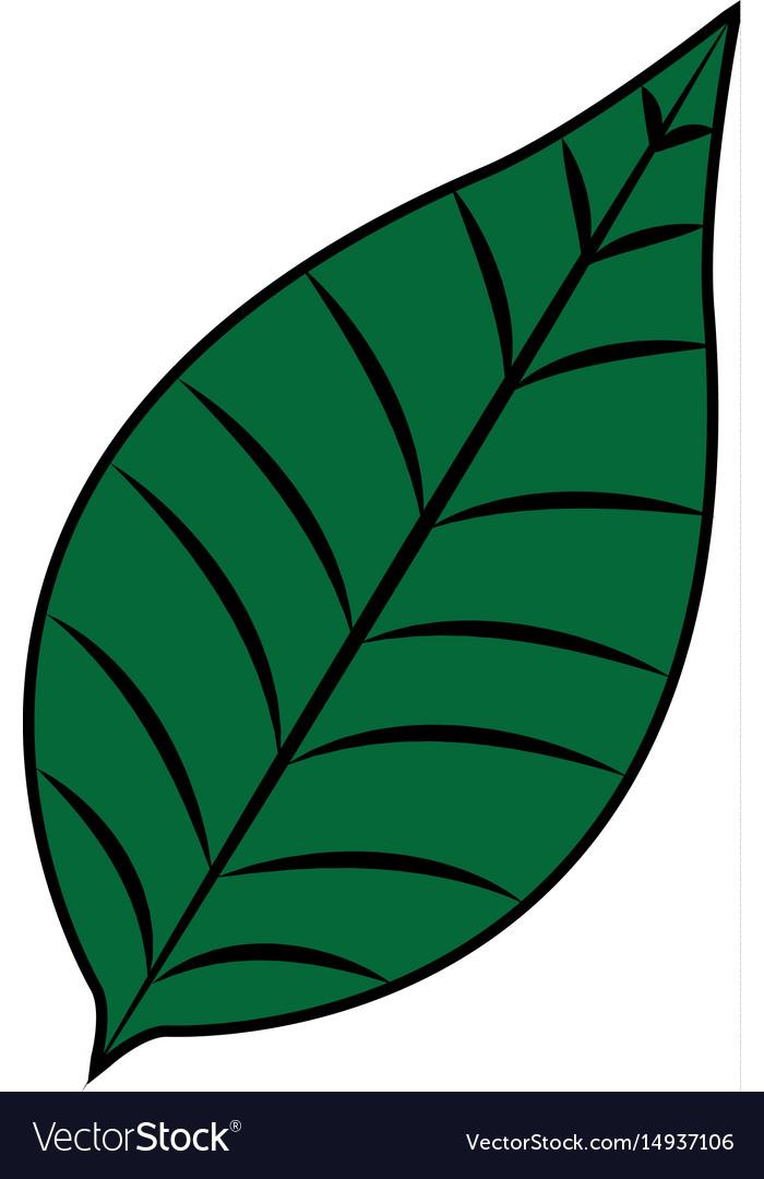 Nature leave foliage botanical image vector image