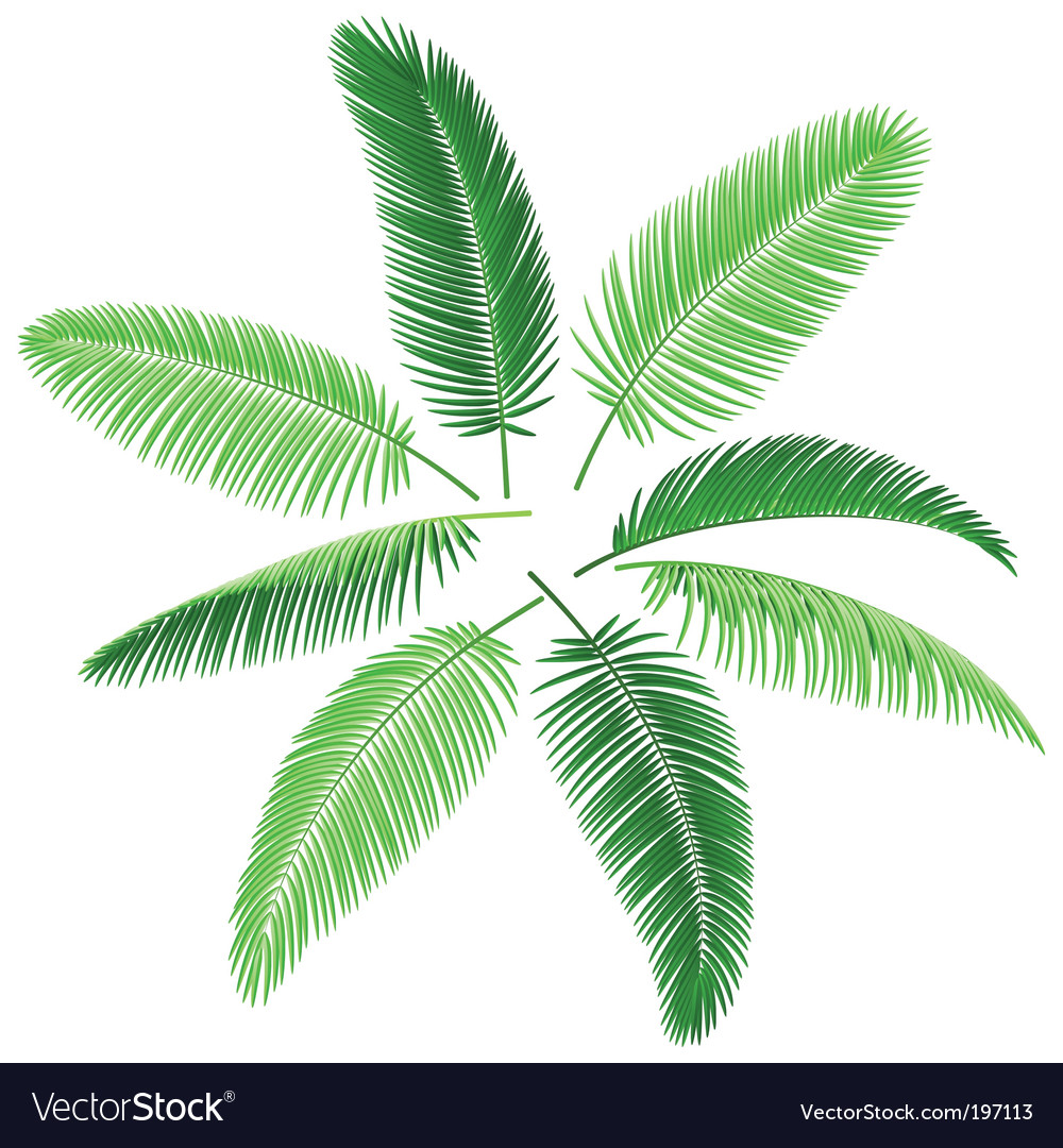 Set of palm leaves vector image
