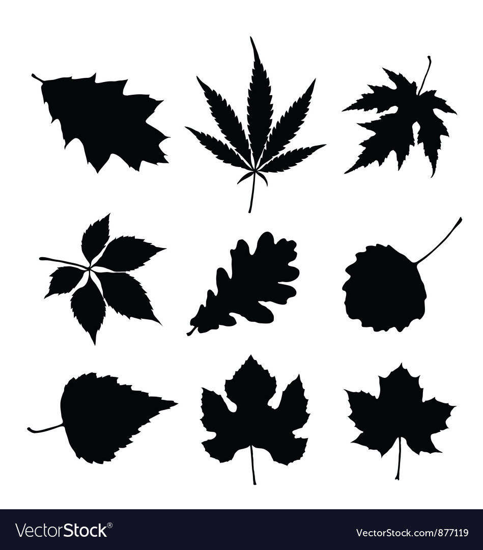 Leaf silhouette set vector image