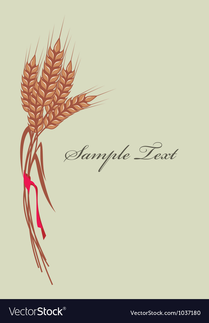 Wheat background vector image