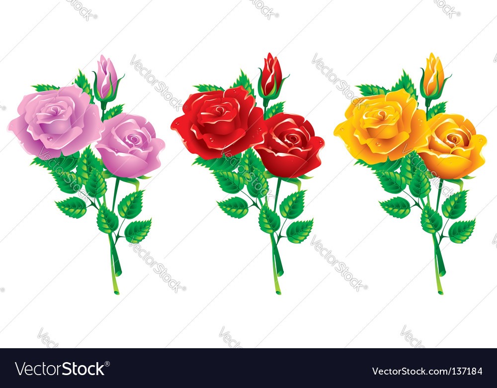 Set of bouquets of roses vector image