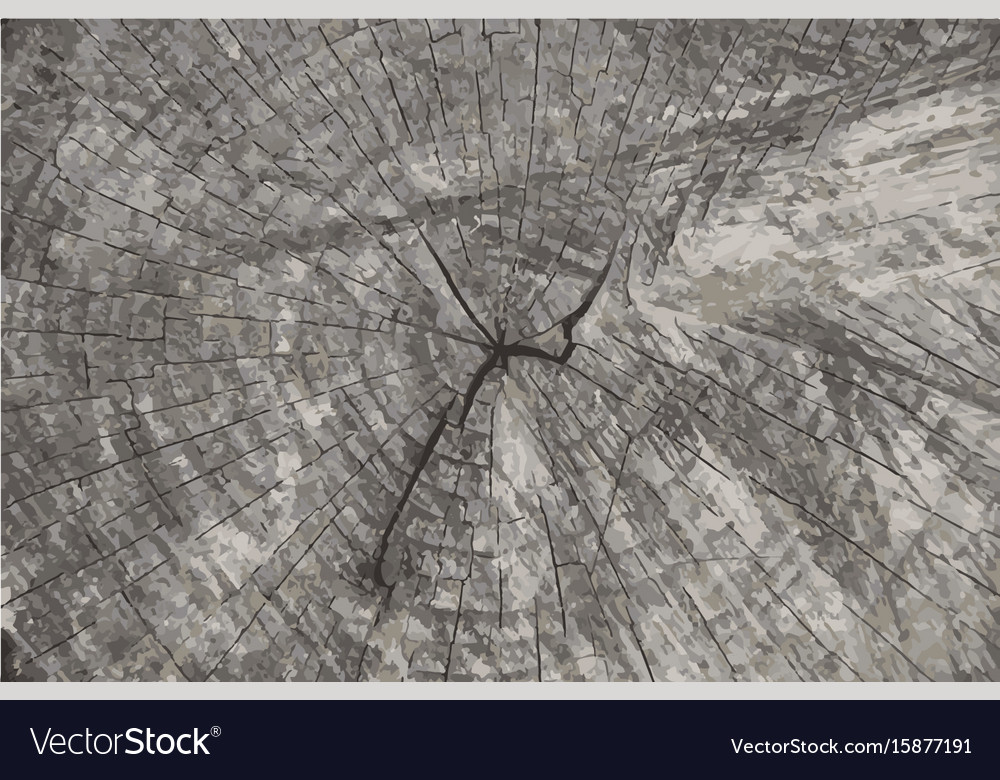 Grunge texture background natural wooden vector image