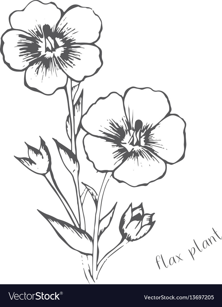 Flax flowers are hand-painted in one color vector image