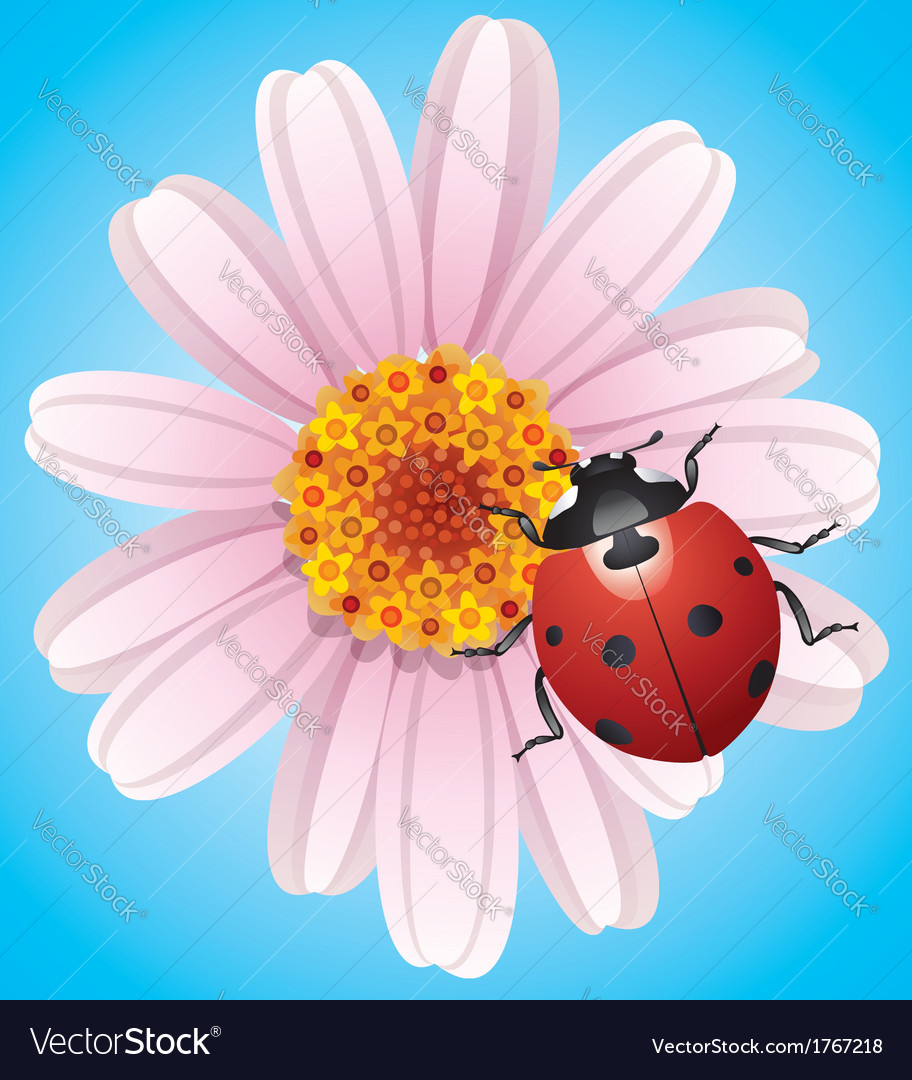 Flower and ladybird vector image