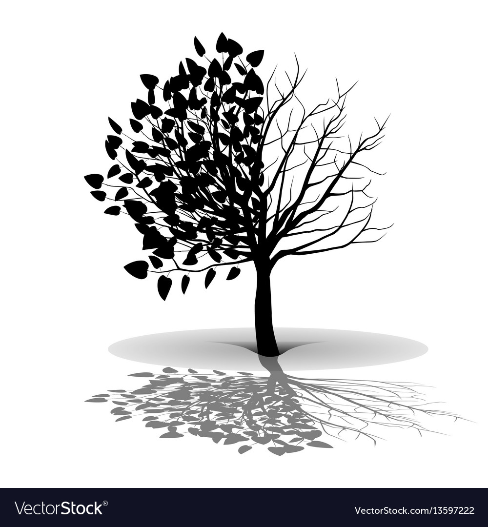 Plant tree silhouette vector image