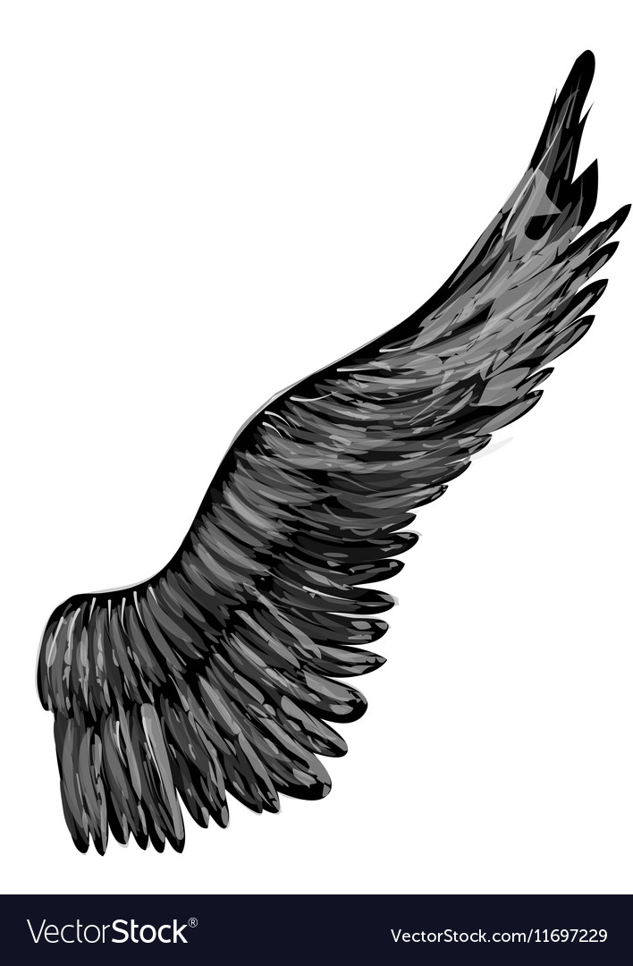 Black abstract wing vector image