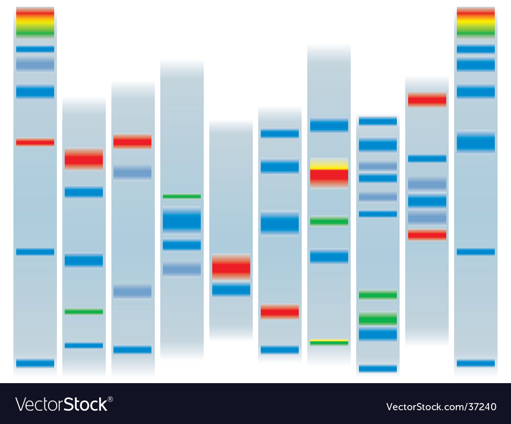 Dna clear vector image