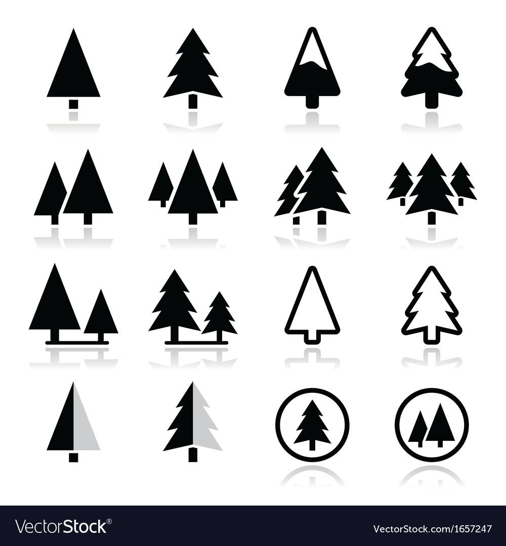 Pine tree icons set vector image