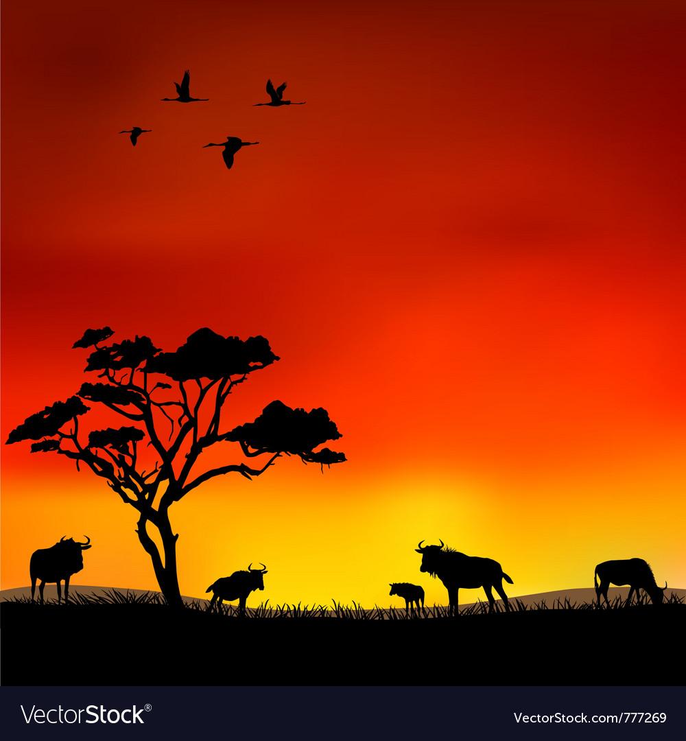 Wildebeest vector image