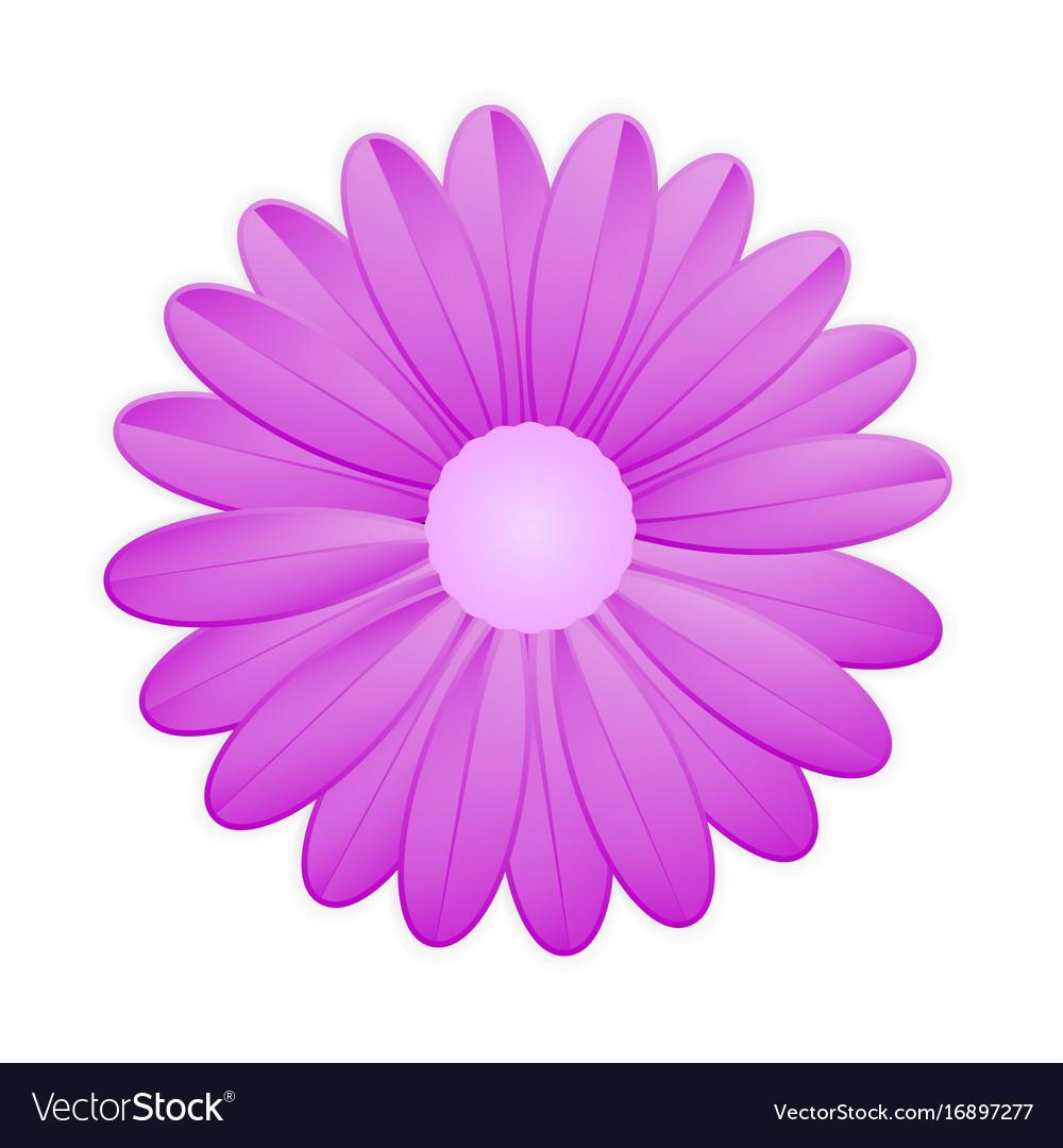 Purple flower on white background royalty free vector image purple flower on white background vector image mightylinksfo Choice Image