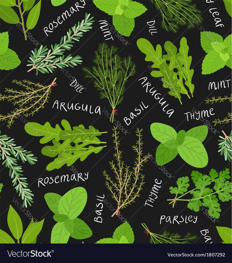 Herbs pattern vector image