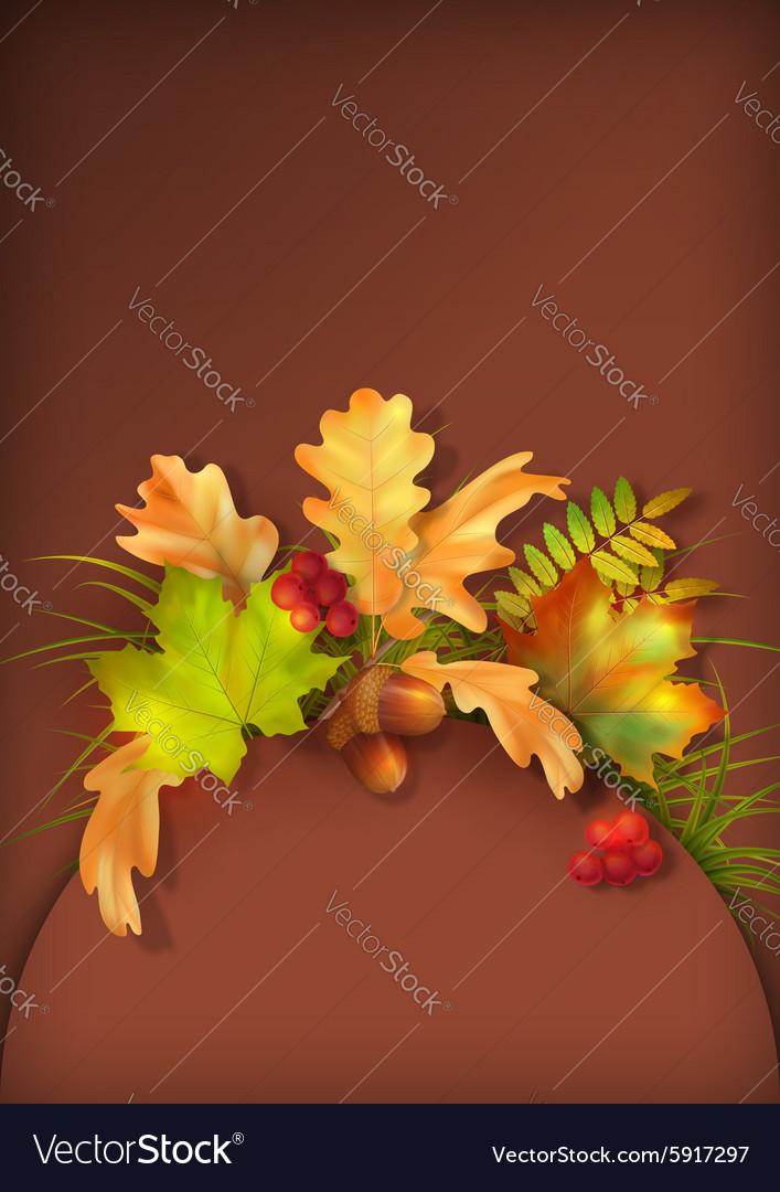 Autumn Fall Leaves vector image